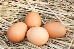 Αυγό φωλιών Στοκ Εικόνες