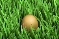 αυγό χρυσό Στοκ εικόνες με δικαίωμα ελεύθερης χρήσης