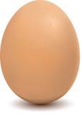 αυγό απεικόνιση αποθεμάτων
