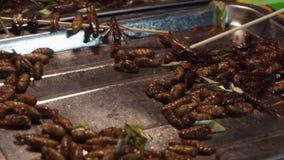 Αυθεντικό παραδοσιακό ταϊλανδικό πρόχειρο φαγητό εντόμων στην ασιατική αγορά νύχτας οδών για την πώληση κουζίνα της Ταϊλάνδης φιλμ μικρού μήκους