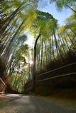 Αυλάκι μπαμπού σε Sagano Arashiyama Κιότο Ιαπωνία Στοκ φωτογραφία με δικαίωμα ελεύθερης χρήσης