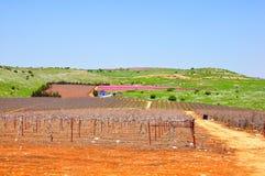 αυλή κρασιού του Ισραήλ Στοκ Εικόνες