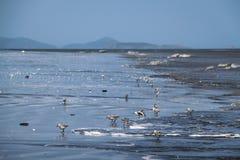 Αυλητές Tiptoeing άμμου μέσω της κυματωγής στοκ φωτογραφίες με δικαίωμα ελεύθερης χρήσης