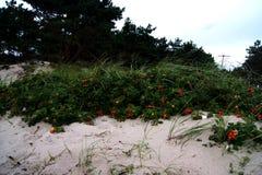 αυξήθηκε άγρια περιοχές Στοκ φωτογραφία με δικαίωμα ελεύθερης χρήσης