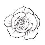 Αυξήθηκε απομονωμένο λουλούδι χέρι περιλήψεων που σύρθηκε Διανυσματικό illus γραμμών αποθεμάτων απεικόνιση αποθεμάτων