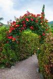 Αυξήθηκε αψίδα στον αγγλικό κήπο χώρας στοκ εικόνες με δικαίωμα ελεύθερης χρήσης