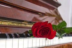 Αυξήθηκε βρίσκεται στα κλειδιά του πιάνου Στοκ Εικόνες
