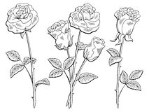 Αυξήθηκε γραφική μαύρη απομονωμένη λευκό απεικόνιση σκίτσων λουλουδιών Στοκ φωτογραφίες με δικαίωμα ελεύθερης χρήσης