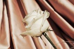 αυξήθηκε λευκό Πολυτέλεια και ρομαντική εικόνα στα εκλεκτής ποιότητας χρώματα Στοκ Εικόνες