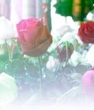 Αυξήθηκε ημέρα βαλεντίνων αγάπης σχεδίου υποβάθρου φύσης λουλουδιών για τα des Στοκ Εικόνες