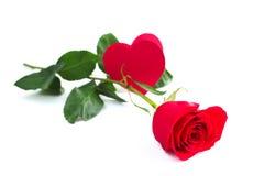Αυξήθηκε και κάρτα καρδιών Στοκ Εικόνα
