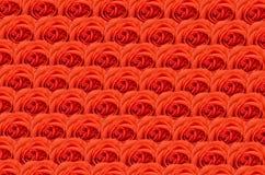 Αυξήθηκε Κόκκινα τριαντάφυλλα για το υπόβαθρο Πολλά τριαντάφυλλα ως floral υπόβαθρο Στοκ φωτογραφίες με δικαίωμα ελεύθερης χρήσης