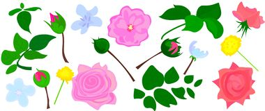 Αυξήθηκε, κόκκινος peony λευκού και burgundy, protea, ιώδης ορχιδέα, hydrangea, λουλούδια campanula και μίγμα των εποχιακών εγκατ διανυσματική απεικόνιση