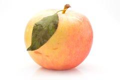 Αυξήθηκε μήλο Στοκ εικόνα με δικαίωμα ελεύθερης χρήσης