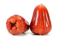 Αυξήθηκε μήλα ή chomphu Στοκ εικόνες με δικαίωμα ελεύθερης χρήσης