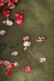 Αυξήθηκε νερό λιμνών τεφρών πετάλων Στοκ Εικόνες