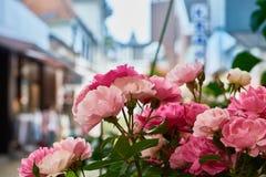 Αυξήθηκε λουλούδια με το υπόβαθρο πόλεων bokeh Στοκ Εικόνες