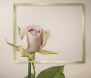 Αυξήθηκε λουλούδια στο σχέδιο των φυσικών σκοτεινών τόνων ο πρόσθετος eps πλίθας χρυσός εικονογράφος πλαισίων μορφής περιλαμβάνει Στοκ Εικόνες