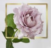 Αυξήθηκε λουλούδια στο σχέδιο των φυσικών σκοτεινών τόνων ο πρόσθετος eps πλίθας χρυσός εικονογράφος πλαισίων μορφής περιλαμβάνει Στοκ Φωτογραφίες