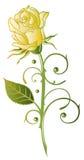 Αυξήθηκε, λουλούδια Στοκ Φωτογραφίες