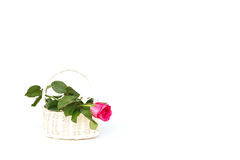 Αυξήθηκε λουλούδι στο ξύλινο χειροποίητο καλάθι που απομονώθηκε στο λευκό Στοκ εικόνες με δικαίωμα ελεύθερης χρήσης