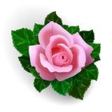 Αυξήθηκε λουλούδι ελεύθερη απεικόνιση δικαιώματος