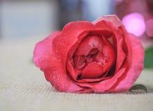 Αυξήθηκε λουλούδι Στοκ φωτογραφία με δικαίωμα ελεύθερης χρήσης