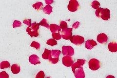 Αυξήθηκε πέταλα λουλουδιών Στοκ Φωτογραφία