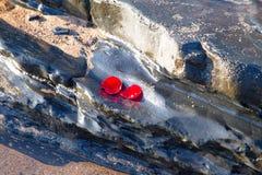 Αυξήθηκε πέταλα σε έναν βράχο στον ωκεανό Στοκ φωτογραφίες με δικαίωμα ελεύθερης χρήσης