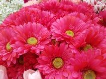Αυξήθηκε πλαστικός αυξήθηκε λουλούδια Στοκ εικόνες με δικαίωμα ελεύθερης χρήσης