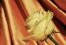 Αυξήθηκε Πολυτέλεια και ρομαντική εικόνα στα εκλεκτής ποιότητας χρώματα Στοκ φωτογραφίες με δικαίωμα ελεύθερης χρήσης