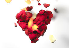 Αυξήθηκε πλαίσιο μορφής καρδιών λουλουδιών στοκ εικόνα
