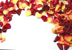 Αυξήθηκε πλαίσιο λουλουδιών ως ρομαντική κάρτα στο άσπρο υπόβαθρο στοκ εικόνα με δικαίωμα ελεύθερης χρήσης