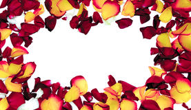 Αυξήθηκε πλαίσιο λουλουδιών ως ρομαντική κάρτα στο άσπρο υπόβαθρο στοκ φωτογραφία