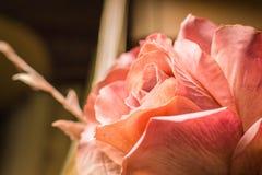 Αυξήθηκε ροζ με το α πέρα από την πλευρά Στοκ Φωτογραφία