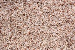 Αυξήθηκε ρύζι ακατέργαστο Στοκ Εικόνα