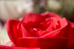 Αυξήθηκε σε μια ανθοδέσμη των λουλουδιών Στοκ Εικόνες
