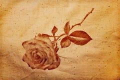 αυξήθηκε σκιαγραφία Στοκ φωτογραφία με δικαίωμα ελεύθερης χρήσης
