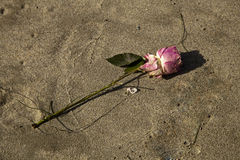 Αυξήθηκε στην άμμο Στοκ Φωτογραφίες