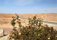 Αυξήθηκε στην έρημο. Ιορδανία Στοκ Φωτογραφία