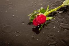 Χαμένη έννοια αγάπης και θανάτου Στοκ Φωτογραφίες