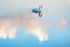 Αυξήθηκε σύννεφα και άσπρος κύκνος Στοκ Εικόνες
