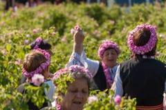 Αυξήθηκε φεστιβάλ επιλογής Στοκ Φωτογραφία