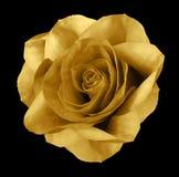 Αυξήθηκε χρυσό λουλούδι στο απομονωμένο ο Μαύρος υπόβαθρο με το ψαλίδισμα της πορείας Καμία σκιά closeup Στοκ εικόνες με δικαίωμα ελεύθερης χρήσης
