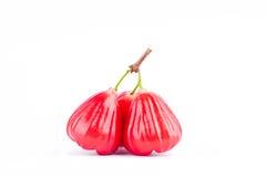 αυξήθηκε chomphu μήλων έχει τα γλυκά φρούτα γούστου στο άσπρο υπόβαθρο υγιές αυξήθηκε τρόφιμα φρούτων μήλων που απομονώθηκαν Στοκ Εικόνα