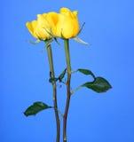 Αυξήθηκε Floral ρύθμιση Στοκ Εικόνα