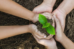 Αυξανόμενα παιδιά χεριών ομάδας eco έννοιας που φυτεύουν μαζί έτσι Στοκ Εικόνες