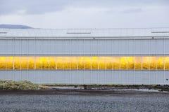 Αυξανόμενα φω'τα θερμοκηπίων Στοκ εικόνα με δικαίωμα ελεύθερης χρήσης