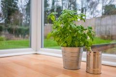 Αυξανόμενα χορτάρια και λαχανικό στο σπίτι Στοκ Φωτογραφίες