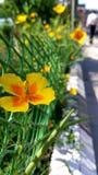 Αυξηθείτε έξω από τα όρια Στοκ φωτογραφίες με δικαίωμα ελεύθερης χρήσης